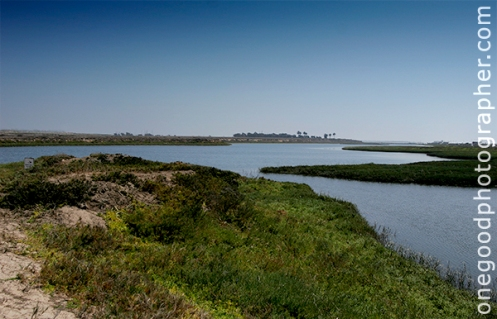 Beautiful Wetlands at Bolsa Chica Beach
