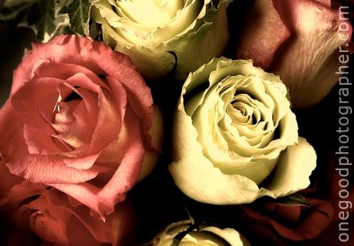 Beautiful Loving Roses