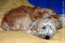 lazy_dog_3107-copy