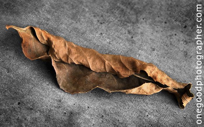 leaf-copy1