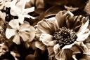 purpleflowers-copy1