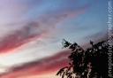 sunset_20081104_3247-copy