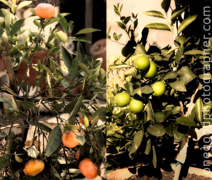 fruittrees-copy