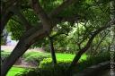 greentrees_sb_2103-copy