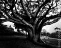 gwc_tree2_5020-copy