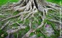 roots_5046-copy