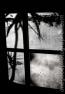 shadow_20081222_3646-copy
