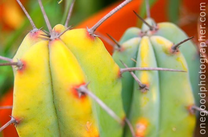 cactus_8725-copy