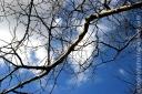 branch_2267-copy