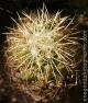 cacti_20090203_4140-copy