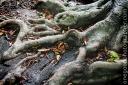 roots_20090207_4221-copy