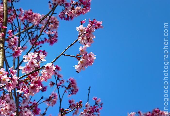pink_20090303_4395-copy