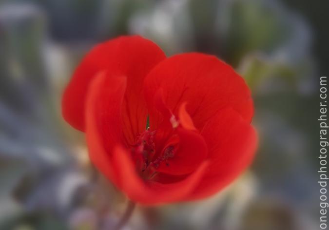 flower_20090403_5512-copy
