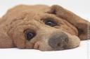 Doggy_062809_1585