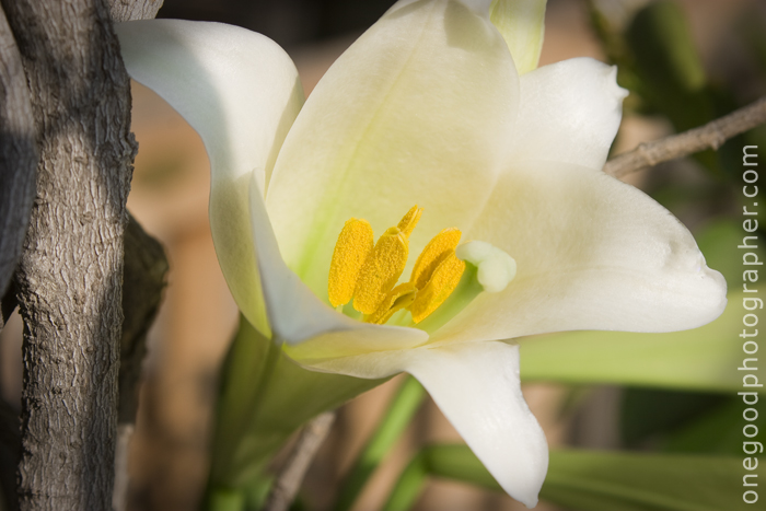 Lily_060109_1481