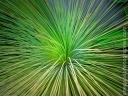 Plant_20090613_1373