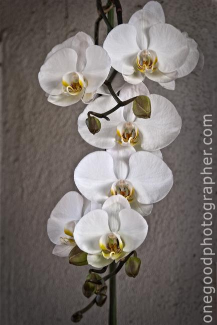 Orchids_3404_1404