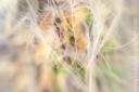 Cactus_1591