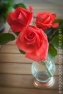 Roses_1722