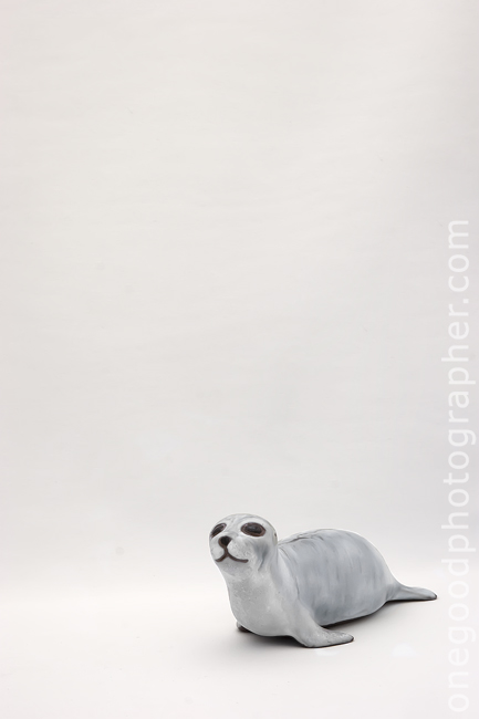 Seal_1759